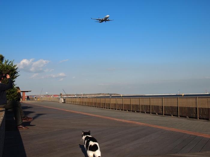 飛行機が見られることでも人気のある大田区城南海浜公園。  「どこか遠くに行っちゃおうかな」と考えながら、だんだんと元気がわいてくることもあると思います。