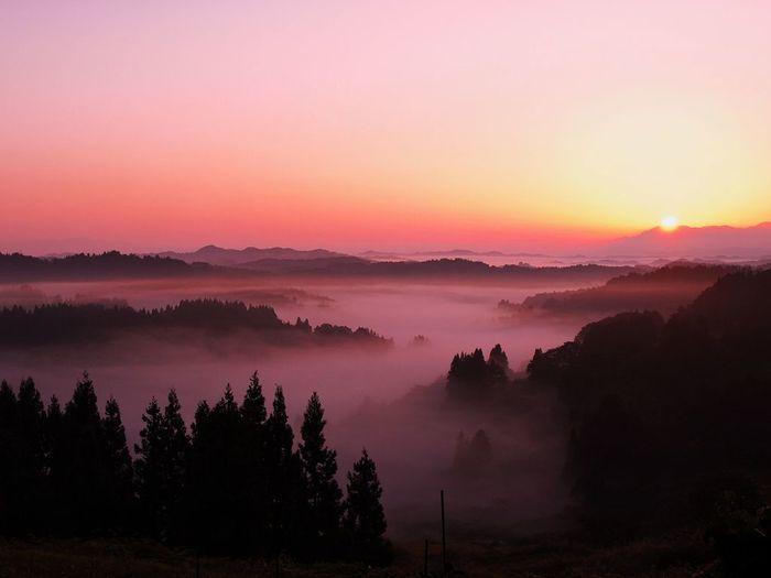 雲海のベストシーズンは6月下旬と9月(画像は9月中旬)。この季節の雲海は、すっかりと棚田を覆ってしまいます。