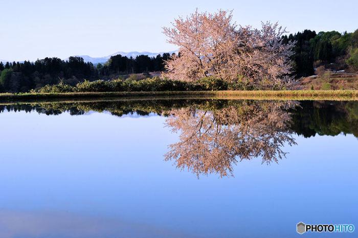 桜が鏡のような水面に見事に映る春の星峠の棚田。のどかで静かな光景に心洗われます。