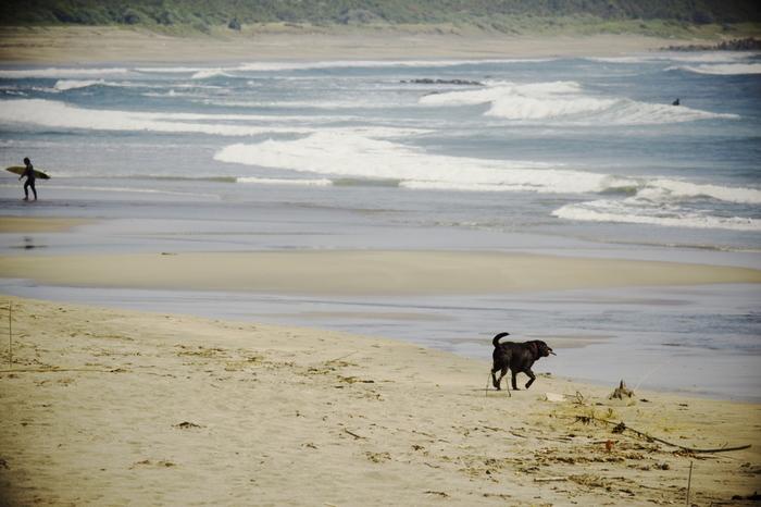 南房総半島の千倉には2つの海水浴場があり、400mの海岸線を持つ南千倉海水浴場は、透明度の高い海はもちろん、砂浜もきれい広いので、海水浴シーズンには小さな子どもを連れたファミリーも多く訪れます。