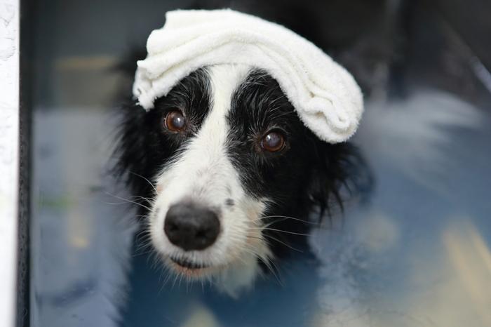 箱根といえば、やっぱり温泉ですよね。もちろんわんちゃん用のスパもあります!敷地内で汲み上げたアルカリ泉のかけ流し温泉は、愛犬の皮膚と毛づやに良いと評判だそう。