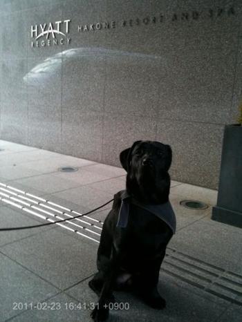 わんこが泊まれるだけではなく、こちらではレジデンシャルドッグのHARUくんもお出迎えしてれます。わんこを飼っていない愛犬家さんにも嬉しいポイントですね。