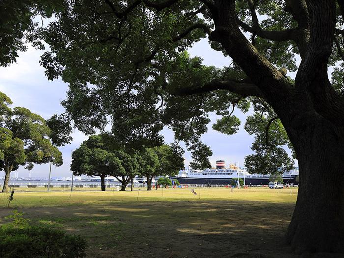 芦ノ湖や富士山などの箱根の自然をパノラマビューで楽しめる「富士芦ノ湖パノラマパーク」は、7~8月になると一斉にユリの花が咲いて「ゆり園」が開催されます。