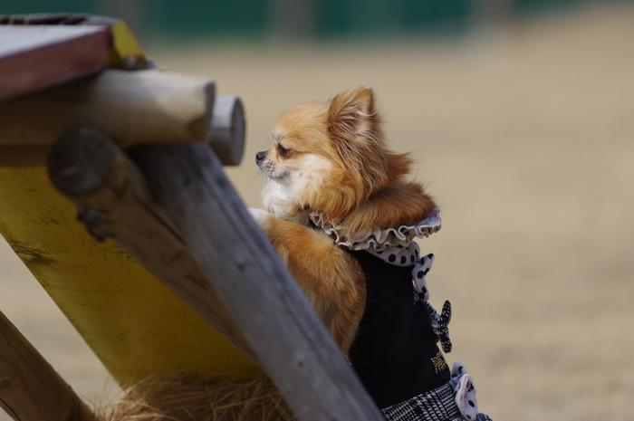 「伊豆ぐらんぱる公園」では、もはやドッグランは定番。他にも、ゴーカートやおもしろ自転車など、乗り物も愛犬と一緒に楽しめるのが魅力です。