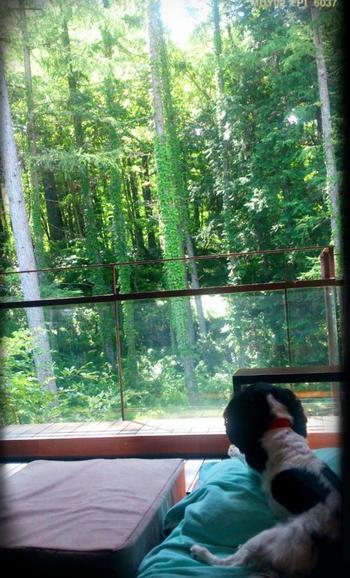 箱根の「雲外荘」と同じ系列の富士の温泉リゾートです。落ち着いた北欧調のインテリアで、窓から見える富士山の美しい森林を眺めていると、まるで外国にきたような気分を味わえます。