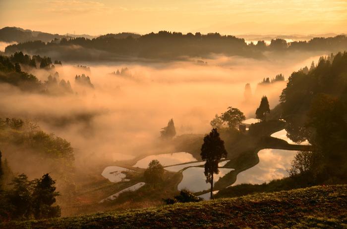 10月下旬に撮影された《蒲生の棚田》。こちらも雲海が幻想的。