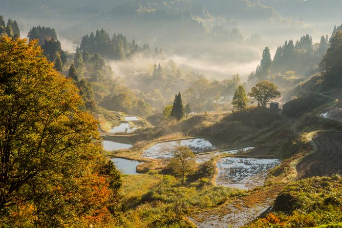 木々が色づきはじめた秋の蒲生の棚田。深く神秘的な光景はそのまま絵画にして飾っておきたいほど素敵。