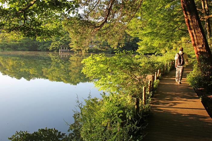大きな池がある石神井公園は散策にもぴったり。大泉方面は東映撮影所があることでも知られています。落ち着いた街でのどかな光景が広がります。
