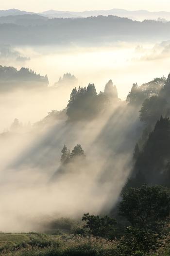9月中旬のたっぷりの雲海と光芒、手前のススキがまるで掛け軸のような情景を演出しています。