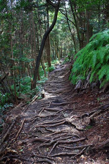 「天の岩戸」を過ぎると、木立の山道が続きます。