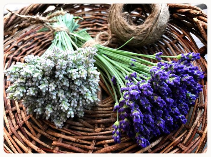 深い紫色と気品ある香りから「ハーブの女王」と称されるラベンダー。たくさん咲いたものは摘みとって、茎ごとリボンや麻紐で束ねて逆さに吊るす「スワッグ」にしてみてはいかがでしょうか?きれいな紫色を保ったままドライになっていき、長く香りを楽しめますよ。