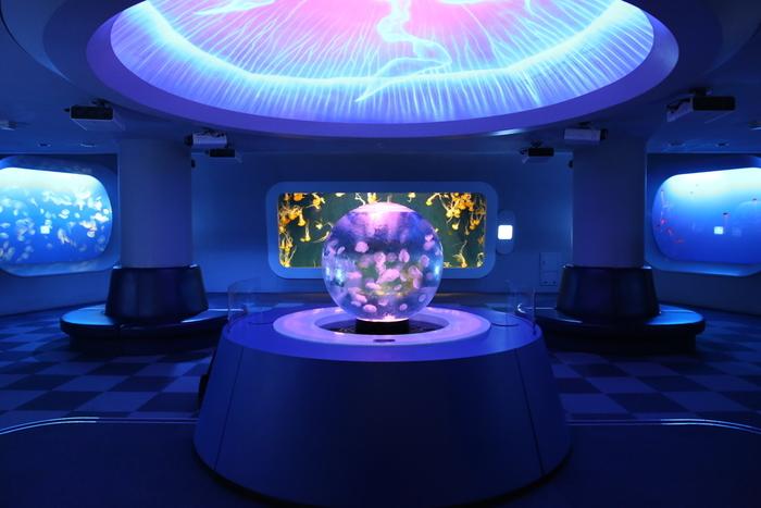 江の島の名所でもある「新・江の島水族館」。7月15日からスタートしている「ナイトワンダーアクアリウム」という17時から始まるスペシャルイベントも必見です。