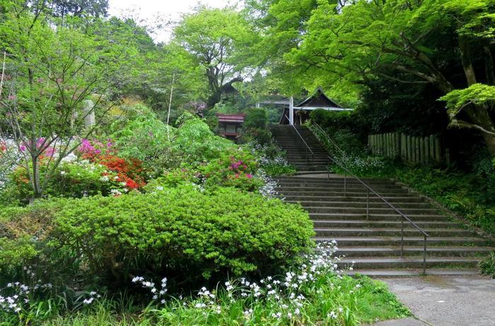 「日向大神宮」は、平安遷都以前の顕宗天皇(けんそうてんのう)の時代に、日向国高千穂ノ峰の神跡を移して創建されたと伝わります。【登山コースは、画像の石段を上り、境内を進みます。】