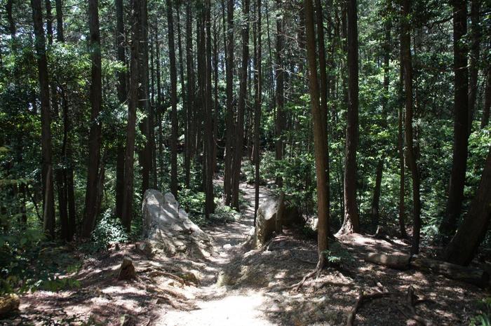【「七福思案処」付近の林道】