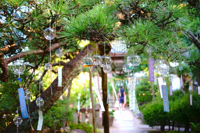 松の木に吊るされた風鈴。日本的な雰囲気が感じられて風流ですね。