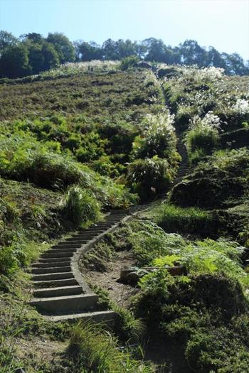 急勾配ですが、石段は歩きやすく、視界が開けているので、空中散歩をしているような気分に浸れるかもしれません。