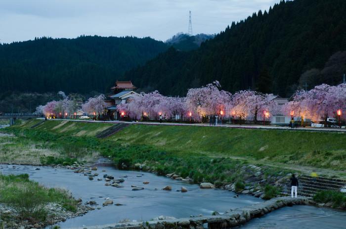 新庄村は、桜の名所でもあります。出雲街道の両横に植えられた桜並木は、春が訪れる頃、一斉に花を咲かせ訪れる人を魅了してやみません。