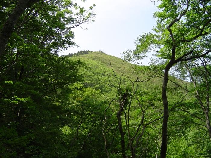 大山隠岐国立公園の一部となっている毛無山は、鳥取県と岡山県の境に位置する標高1964メートルの山で、中国百名山の一つに数えられています。