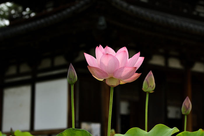 そんな奈良県には、のどかな雰囲気にぴったりのナチュラルでお洒落なカフェがたくさんあるんです♪今回は観光はもちろん、そのためだけに奈良に行きたくなるような素敵なカフェをご紹介します。