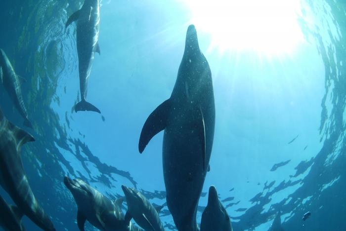 下から見上げるイルカの群れも迫力があり、そしてとても神秘的。