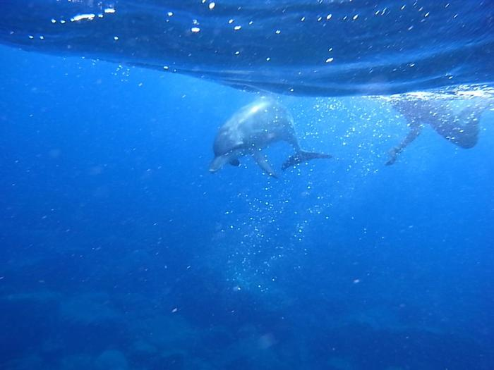とくに、島の周辺には野生のミナミハンドウイルカが生息し、ドルフィンウォッチングやドルフィンスイムなどのアクティビティが大人気。