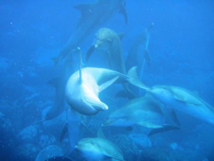 こんなにたくさんの野生のイルカを間近で見るなんて経験、滅多にできないかも。忘れがたいよい想い出になりそう。