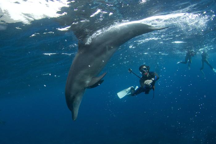 そんな愛くるしい野生のイルカと泳げるドルフィンスイムは4月〜11月まで楽しめます。「イルカウォッチング」が目的の場合は、御蔵島の宿泊予約の際に「イルカウォッチング」も一緒に申し込んでおきましょう。