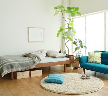 クワ科の植物、ウンベラータは観葉植物の定番。 育てやすいので、初心者にもおすすめです。 ハート型の葉っぱに、クネっとした幹。 シンプルながらも個性派のグリーンは、白を基調とした北欧風のお部屋によく合います。