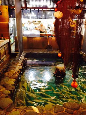 日本初のいけす料理屋として知られる「河太郎」。店内にあるいけすにはたくさんのイカが泳いでいて、注文が入ってからいけすのイカを獲り、捌いてくれます。