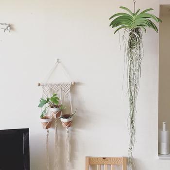 ハンギングプランターとは、植物を植えているプランターを宙に浮くように飾ること。 合わせ方次第では、北欧インテリアをよりおしゃれに見せることができます。