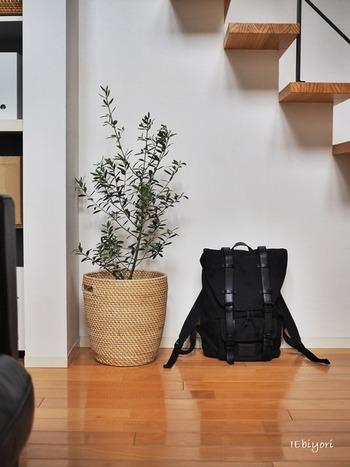 固く樹形のバランスがよい『オリーブ』は、インテリアと掛け合わせず単体で飾っても存在感を保ちます。