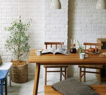 室内で観葉植物として楽しむには、食をイメージするダイニング周りに置くのはいかがでしょうか。いつもの食事も美味しく感じることができそうです。