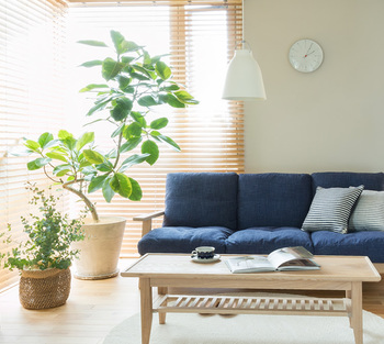育ってくると幹はうねり、個性的な姿を楽しませてくれます。ぷっくりとした姿はチャーミングで、明るいグリーンの葉は、部屋全体に元気を与えてくれます。