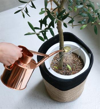 観葉植物に水を与え過ぎると、根腐れして枯れてしまう原因に。気温が高く発育のいい夏以外は、土がカラカラになったのを水やりのタイミングにして、乾いたらたっぷりとあげましょう。