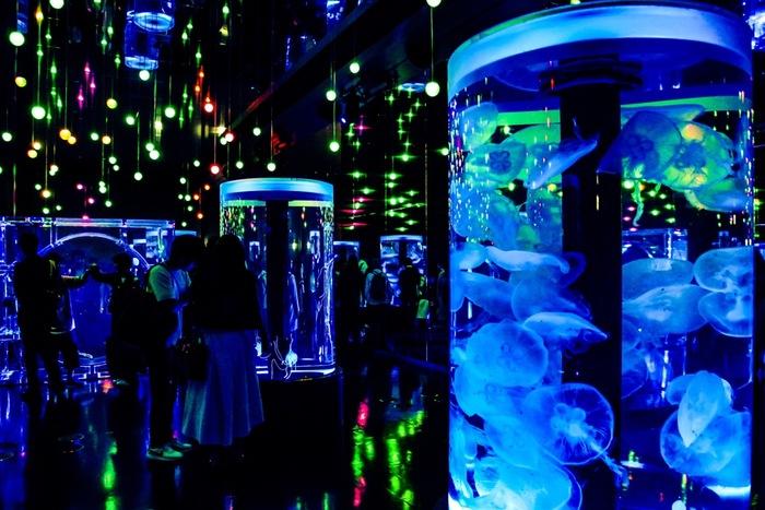 近未来的なライトが一面を彩るのは、「ジェリーフィッシュランブル」と呼ばれるエリア。大人の背丈よりも高い円柱型の水槽の中を、様々な種類のクラゲがゆらゆらと漂っています。時間や季節ごとに違った音と光の演出を楽しめますよ☆