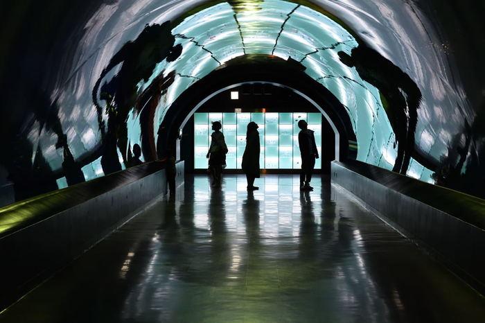 「ワンダーチューブ」は約20mもの長さが自慢の海中トンネル。自然光が差し込む作りになっているため、昼と夜とで全く違う雰囲気を体感できます。日暮れから日没までをゆっくり観察するのもいいですね。