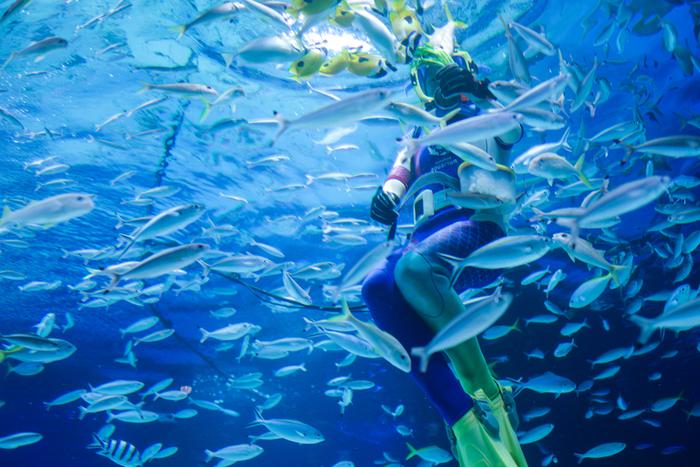 水族館のメインとなる大水槽「サンシャインラグーン」では、ダイバーによる「水中パフォーマンス」が行われます。水中マイクを使って様々な種類の魚たちを紹介してくれるので、お魚好きの方に大変おすすめのパフォーマンスです。