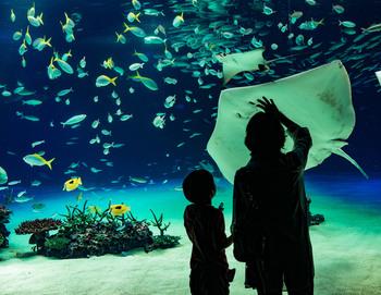 静謐で非日常的な雰囲気を楽しめる「水族館」。そこには、暑さを忘れてしまうほどの清涼感と癒しが待っています。この夏は人気の水族館へ出かけて、思い出に残る一日を過ごしてみませんか?