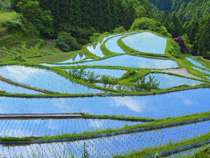 樫原の棚田は、四季折々で美しい景色を見せてくれます。稲の植え付けが行われた直後は水田が鏡のように空を映し出し、棚田の美しさを引き立てています。