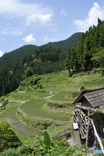 上勝町に数多く点在する棚田では、私たちが想い描く「日本の里山」そのままの風景を臨むことができます。