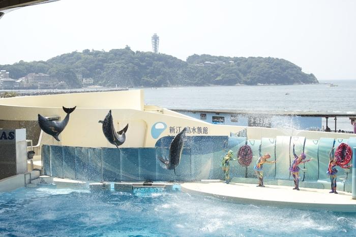 湘南の観光スポット・江ノ島からほど近い場所にある「新江ノ島水族館」。湘南の海をテーマにした展示も多く、東京の水族館にはない見所が満載です。イルカやアシカのショーが行われる「イルカショースタジアム」は、江ノ島をバックにした絶好のロケーション。お天気が良ければ、遠くに富士山が見えることもありますよ。