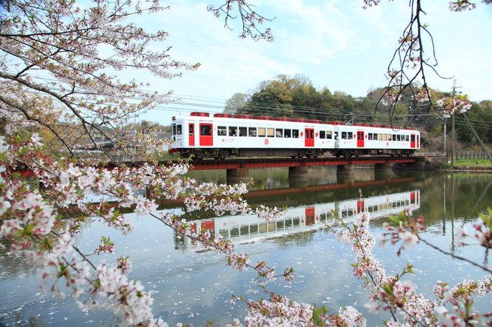 貴志駅からは、いちご狩り園に行くこともできます。冬から初夏にかけていちご狩りができますよ。貴志川線では「いちご電車」も走っていて、いちごモチーフでいっぱいの可愛い電車に乗ることもできます。