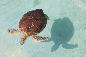 開業10周年記念として、2014年に屋外エリアにオープンした「ウミガメの浜辺」。砂浜付きのプールの中を、ウミガメたちがゆったり泳ぎ回っています。砂浜では産卵も行われ、時期によっては子ガメの姿を見ることもできます。