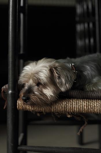土間スペースにペットのおうちをおいてあげるなら、床を蓄熱暖房にしたりすると冬は暖かく、夏場はタイルがひんやりと冷たいので、ペットにとってもお気に入りの場所になるでしょう。きっと、ペットも大満足のはず!