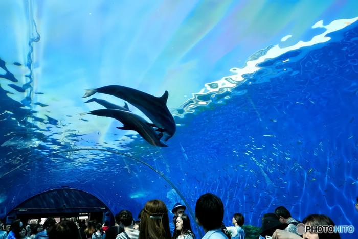 水族館だけでなく、アトラクションもたくさん揃う複合テーマパークなのが「八景島シーパラダイス」。水族館とは別に、海の生き物と触れ合えるエリアもあったりと、1日では周りきれないほどです。