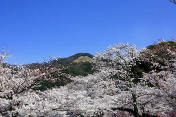 京都にはたくさんの有名観光地があるけれど、白川通と言われてピンとくる方は少ないかもしれません。 京都市の東側を南北にはしっている白川通沿いには、銀閣寺があったり大文字山が望めたりと、ガイドブックに載っているような観光地もありますが、地元の方が愛するこだわりのカフェも多くあるのです!