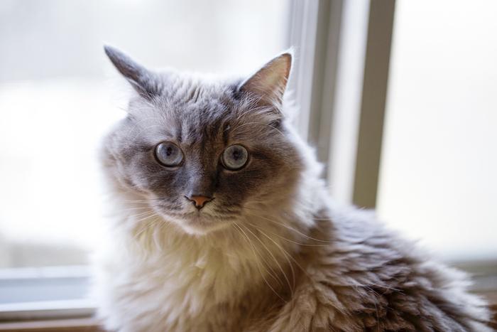 """カットヘムからまずボランティアで猫を預かって、そのまま買い取ることもできるんですよ。『お試し』というとちょっと聞こえは悪いですが、やはり動物と飼い主の相性もありますので、試しにお家にお迎えして""""ずっと生涯面倒見ていけるな""""と思えば引き取ればいいですし、ダメそうならば元々の期間で戻すことも出来ます。 お子さんが安易にペットが欲しい!となったときもすぐに買い与えるだけでなく、ペットが家族として加わることはどういうことなのかといったことを学べますね。"""