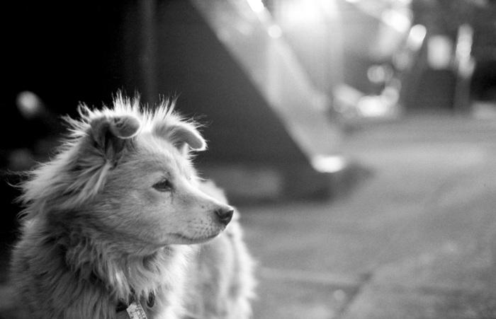 スウェーデンで飼われている犬には、産まれるとマイクロチップが埋め込まれます。そこに飼い主のデータや電話番号などが登録されており、迷い犬でも飼い主の元へ戻れるようになっています。さらにこのマイクロチップが【犬の身分証】のようなものでもあり、獣医さんにかかるときやペット保険に加入するときにも必要となっています。 ちなみに犬もEU内を自由に移動(引越しや旅行)できるようにと【ペットパスポート】があるのですが、こちらの申請もこのマイクロチップが必須となっています。