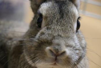 ウサギのケージも畳一畳ほどの大きさです。日本ではウサギは撫でてあげたり、たまに散歩させたり...と可愛がる方が多いかと思いますが、スウェーデンではアクティブに【うさぎのジャンプ競技会】があったりと、うさぎ専用のジャンプ訓練用具も売っているんですよ。