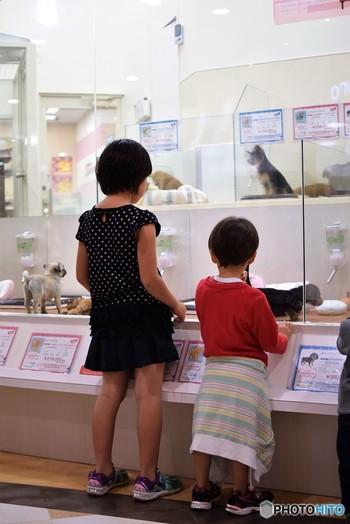 みなさんはペットを飼っていらっしゃいますか?世話をする責任は重大ですが、ベストフレンドにもなり得る愛おしい存在ですよね。日本ではペットを迎えると決めたらまずはペットショップを覗く方が多いかと思うのですが、北欧・スウェーデンではペットショップでは生体の販売をほとんどしていません。